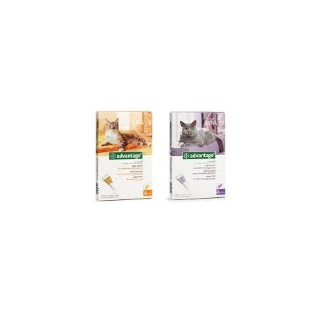 ADVANTAGE 40 CHAT (0-4 KG)     blist/4   sol ext