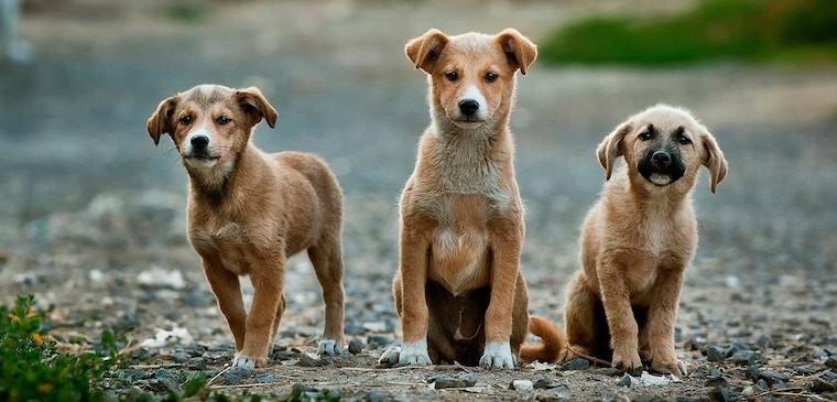 Tous les produits vétérinaires pour votre chien au meilleur prix