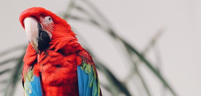 Oiseaux - Rongeurs