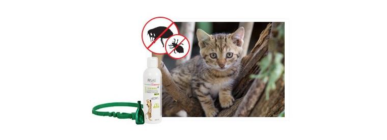 Antiparasitaires externes pour chat